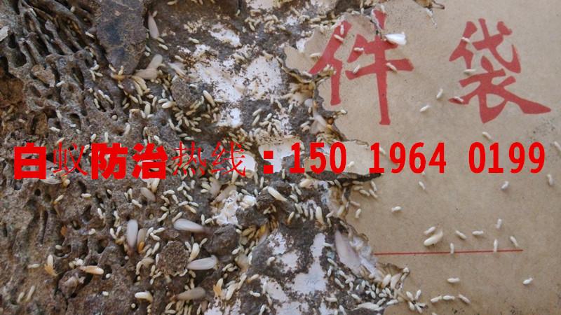 里水白蚁公司,里水白蚁防治中心,里水白蚁防治公司,里水白蚁,里水灭白蚁,里水治白蚁